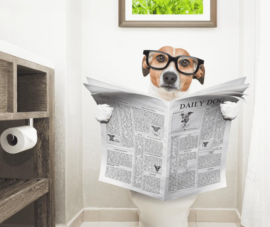 dog using toilet